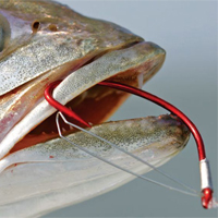 Lưỡi câu cá lóc